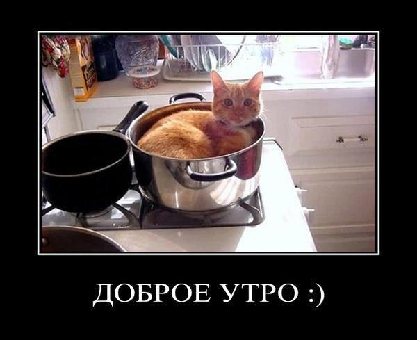 """фото кота в кастрюле с надписью """"доброе утро"""""""