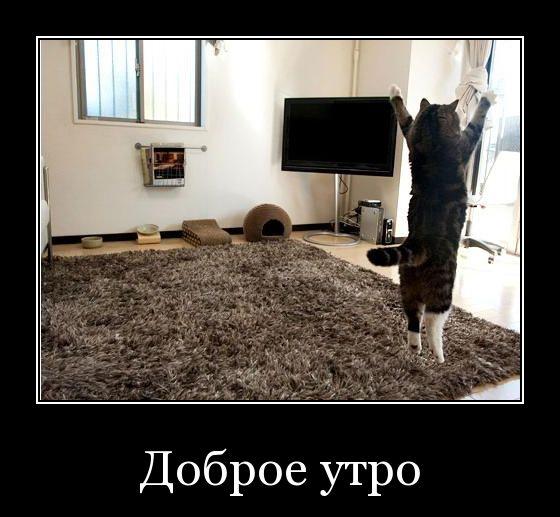 """смешной коте поднял руки вверх. картинка с надписью """"доброе утро"""""""