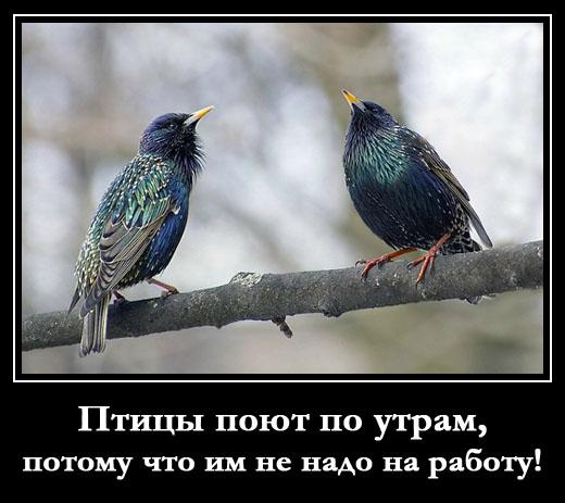 шутливая картинка про раннее пение птиц с утра, потому что им не надо на работу