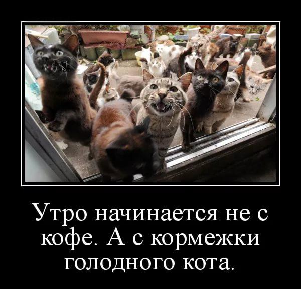 прикол доброе утро, толпа голодных котов