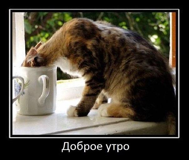 демотиватор доброе утро, кот на окне