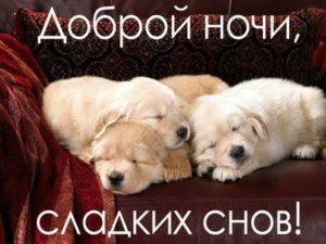 Доброй ночи! Прикольные картинки