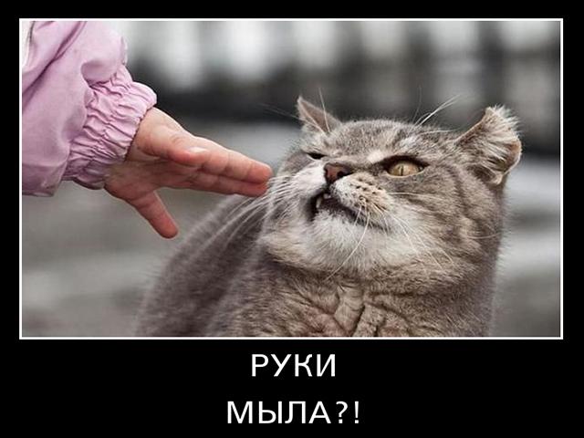 Смешные и ржачные демотиваторы про котов