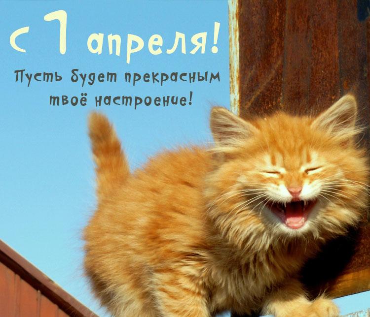 первое апреля смешные картинки кот