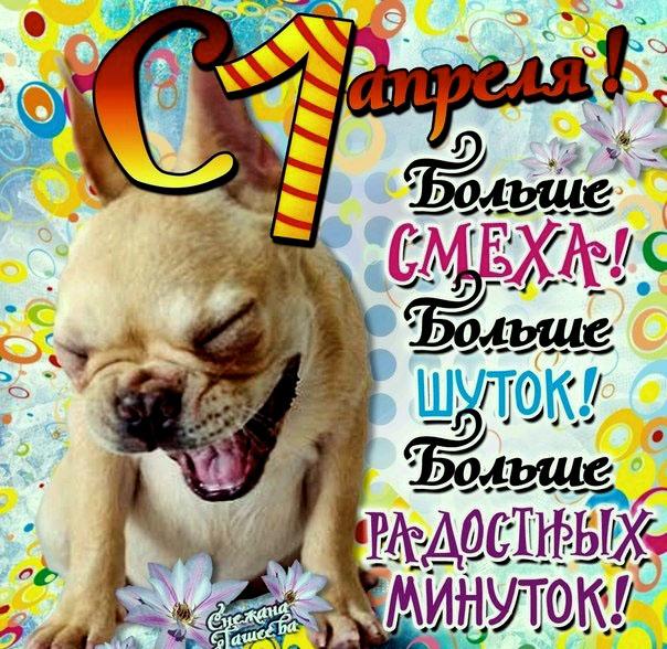день смеха картинки - смешная собака