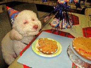 Прикольные и смешные картинки на день рождения