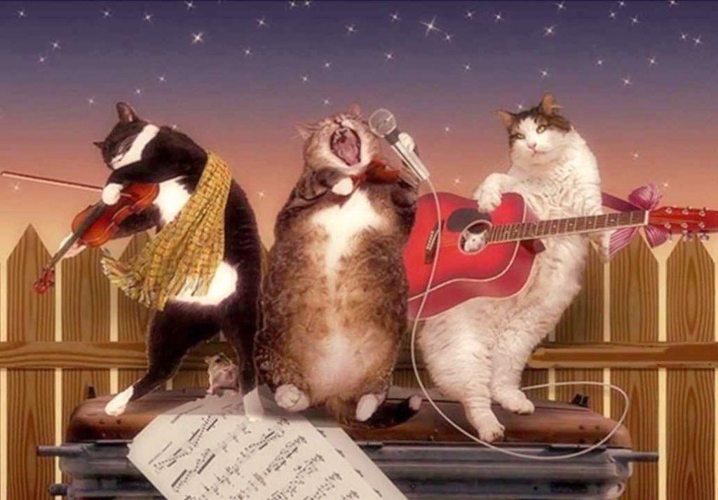 Открытка с днем рождения поющие коты, открытки