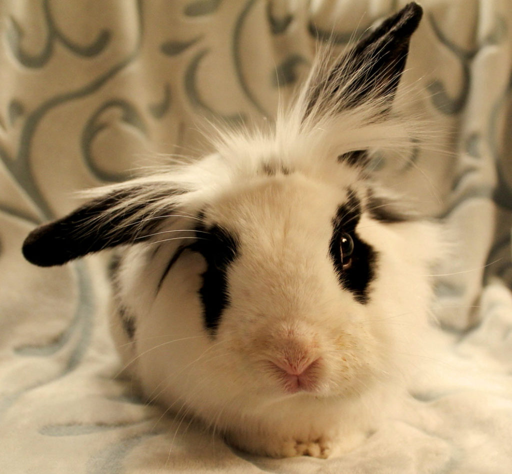компании смешные кролики фото стикеры одном немногих