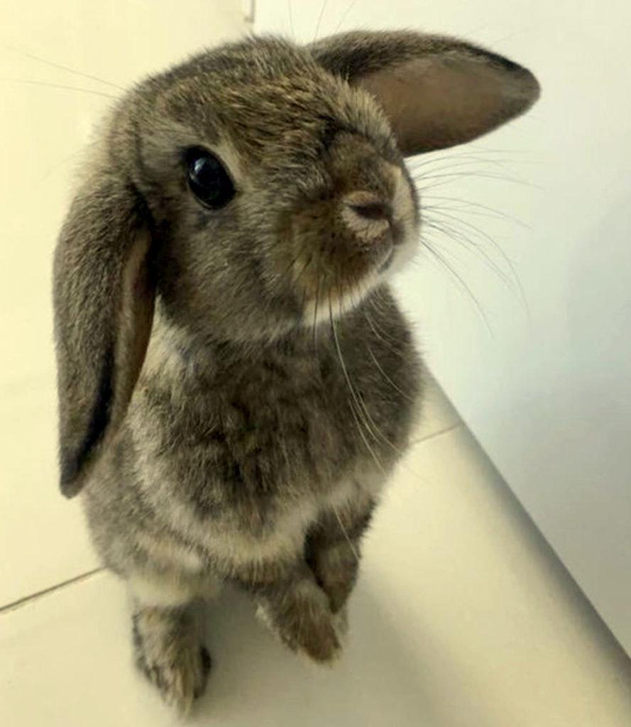 Картинки кроликов и зайцев смешные, сделать открытку быстро
