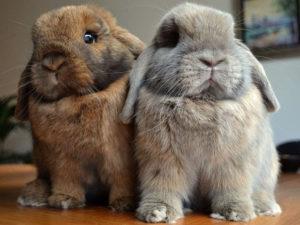 Забавные и смешные кролики (60 фото)