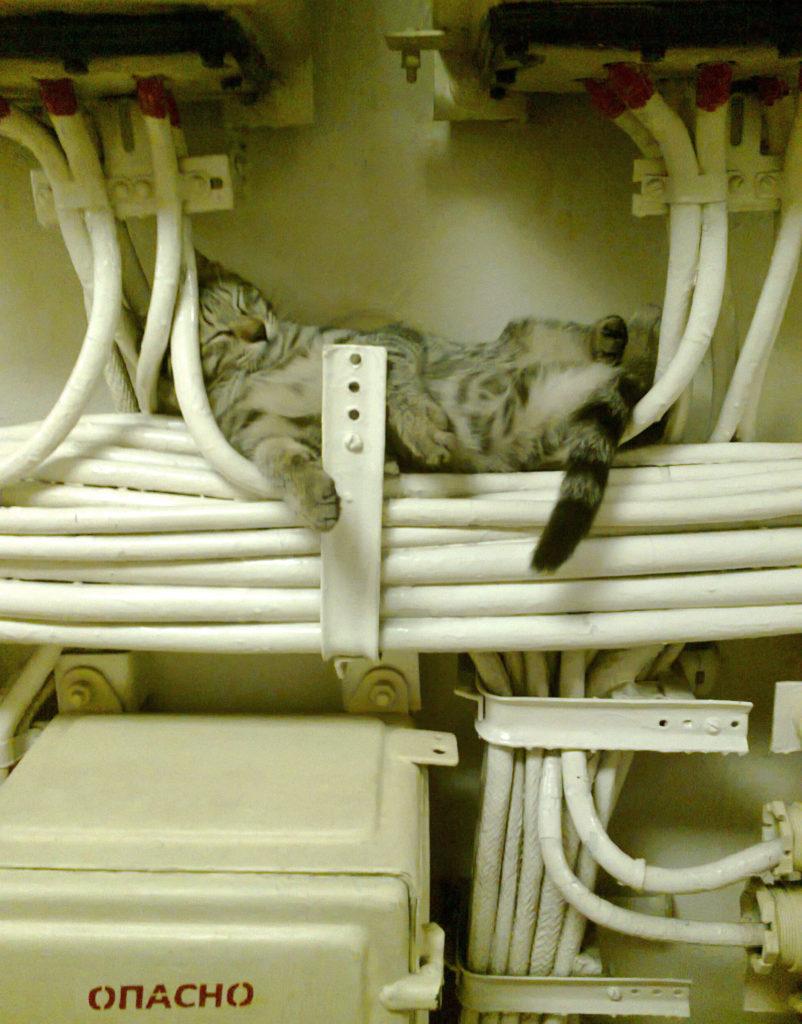 фото электрик прикол с животными