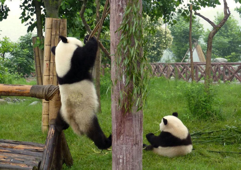 День, панда приколы в картинках