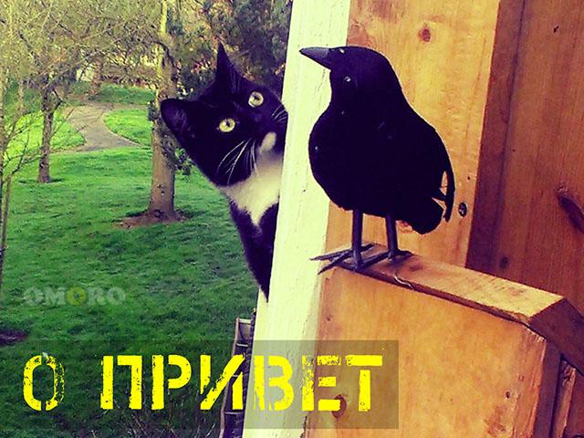 Привет! - Фото приколы