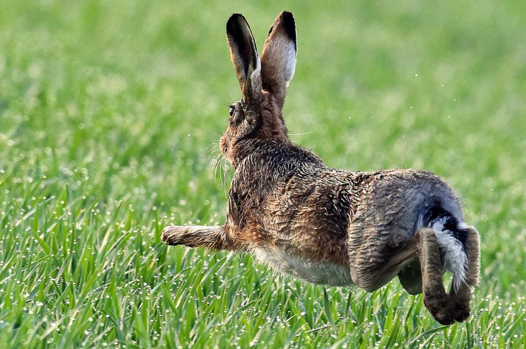 прикольные картинки зайцев на лету