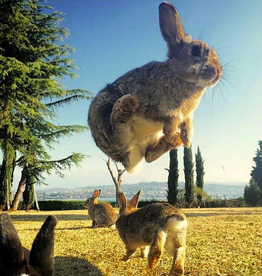 Фото прикольных зайчиков