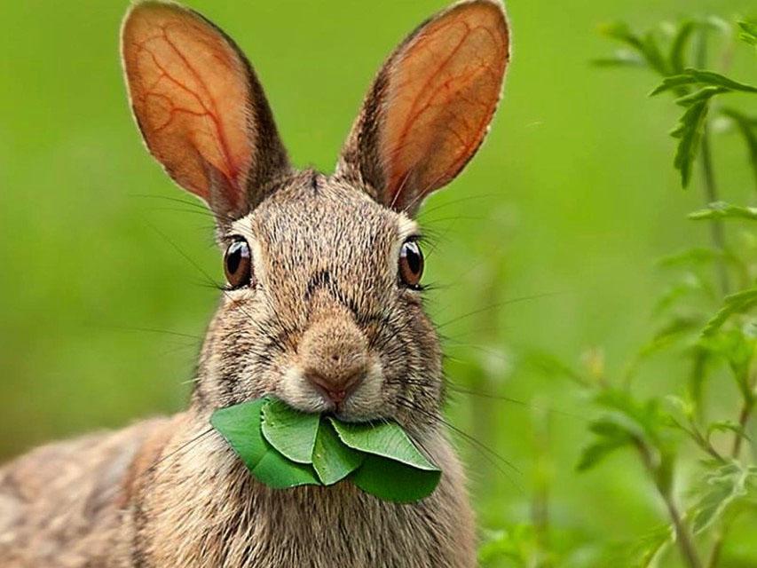картинки про зайчиху декоративного кролика