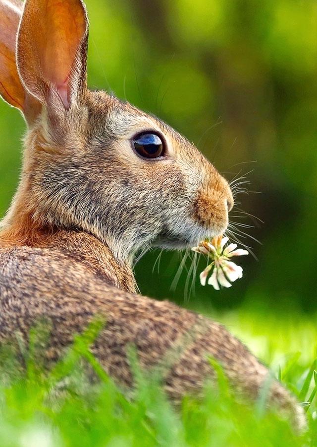 прикольные картинки зайцев с цветком