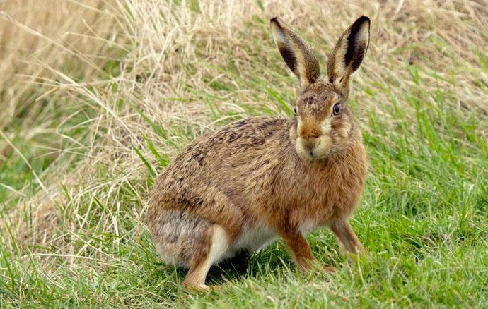 прикольные картинки зайцев