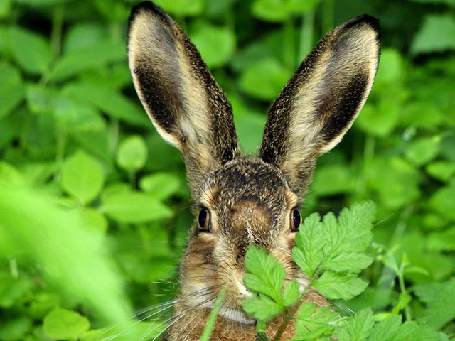 Смешные и прикольные фото зайцев