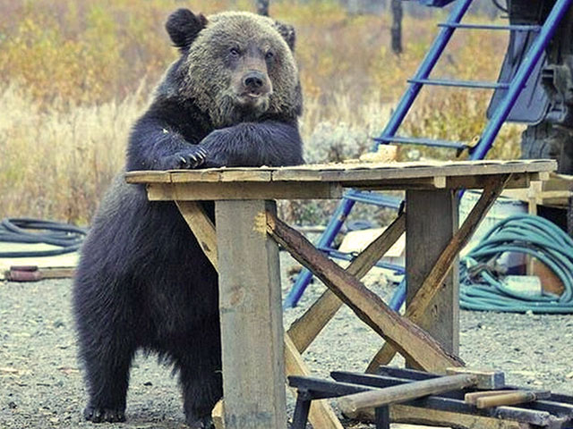 Смешные и прикольные медведи (55 фото)
