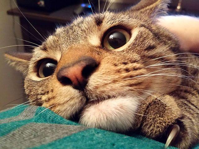 Смешные фото котов приколы (50 фото)