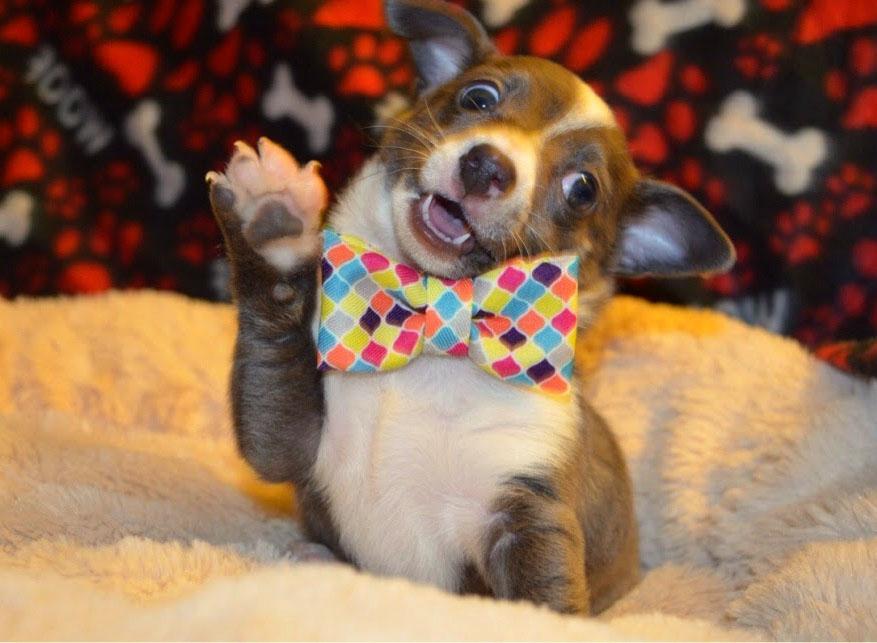 Смешные картинки собак и щенков