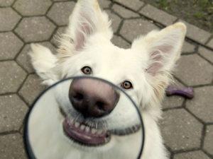 Прикольные и смешные щенки (50 фото)