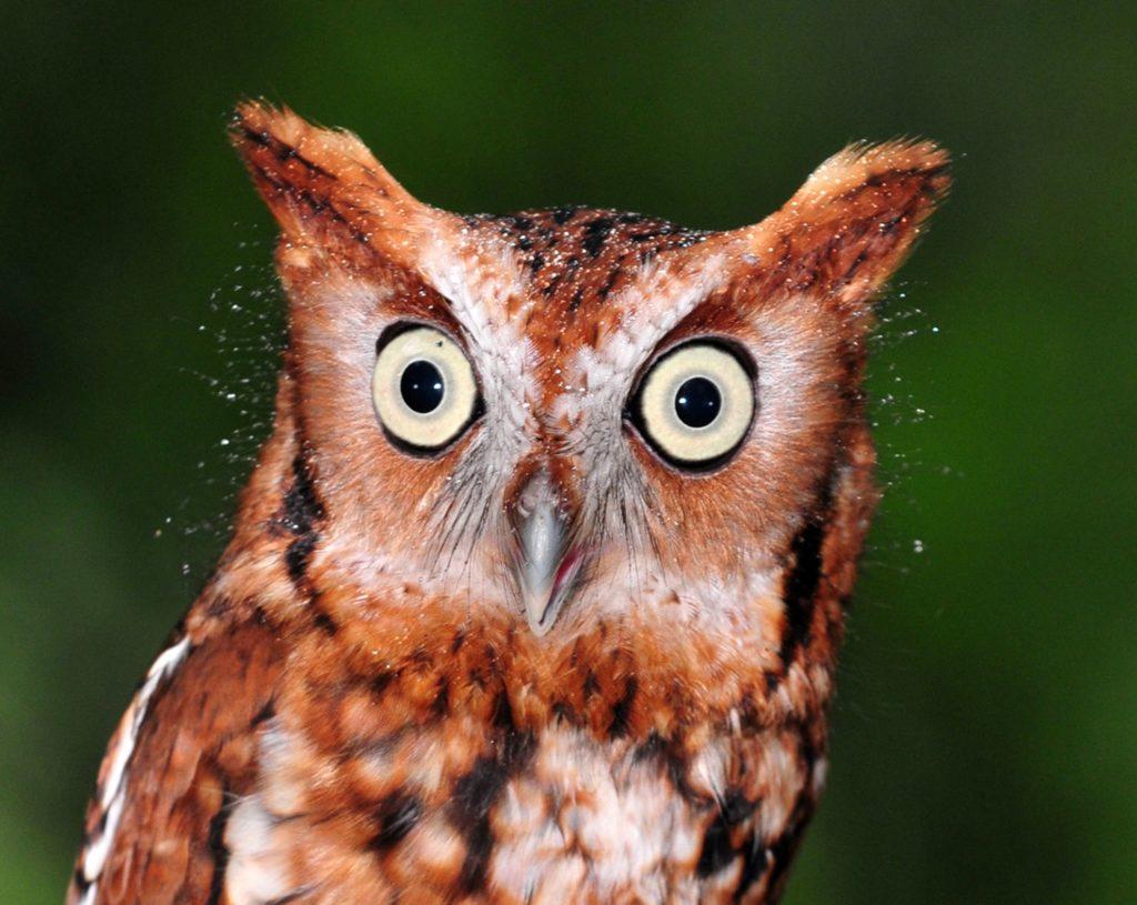 Угарные картинки совы