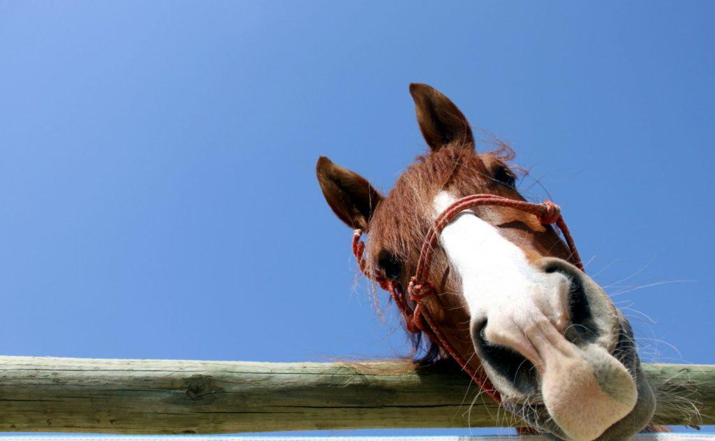 Прикольная картинка с лошадью работа, для