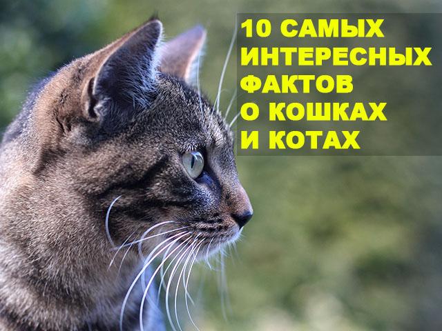 10 Самых интересных фактов о кошках и котах