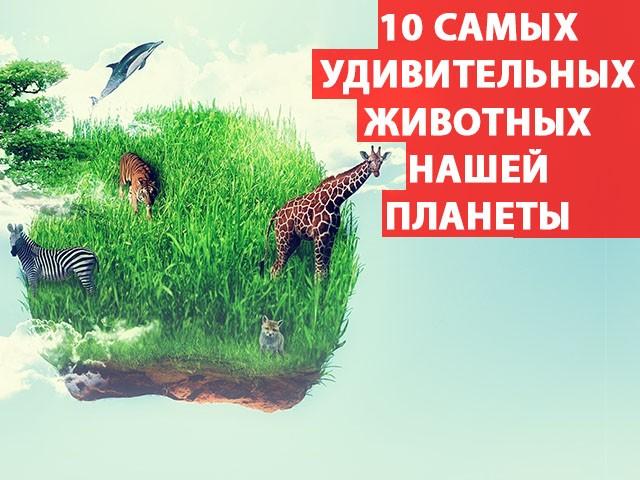 10 самых удивительных животных нашей планеты: Фото...
