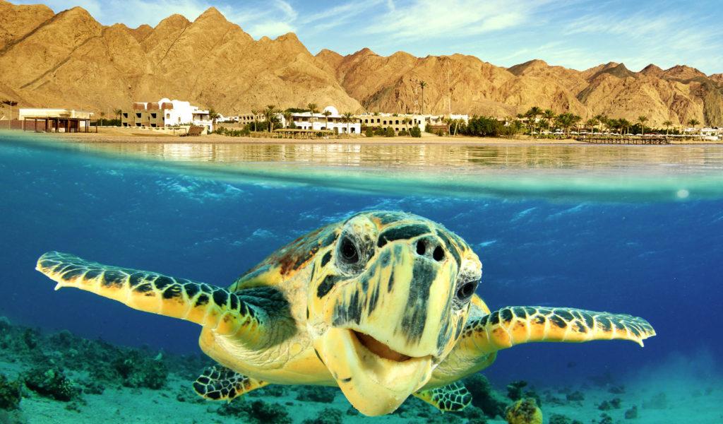 Курорты Египта или почему выбор не однозначен