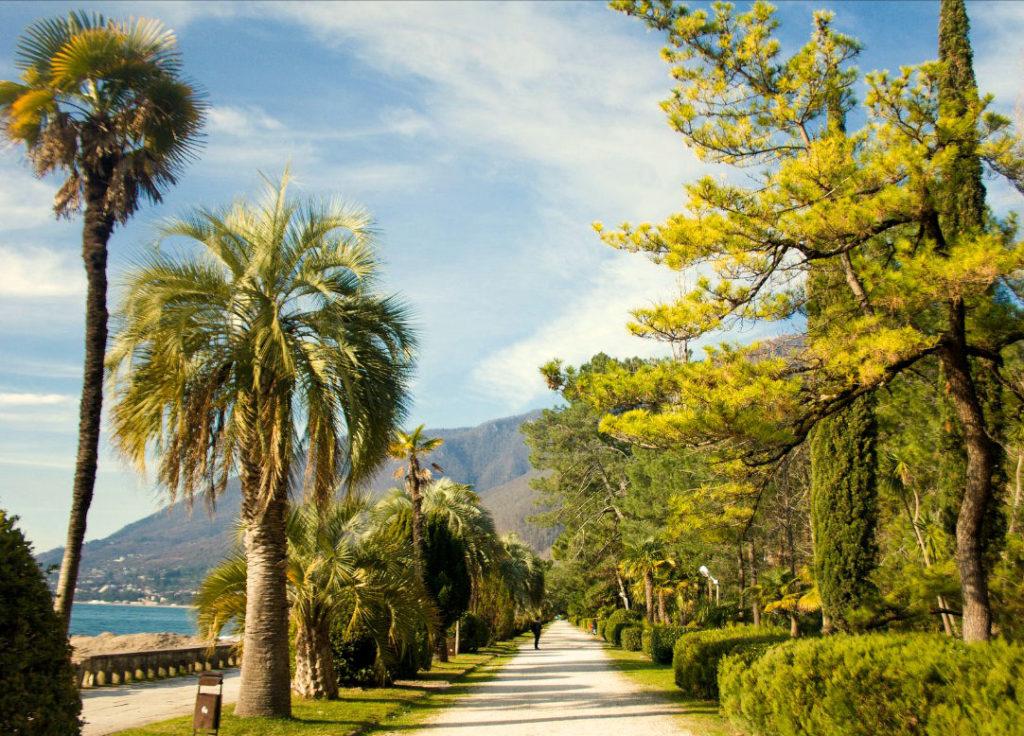 отдых в Абхазии летом - пальмы, сосны, море