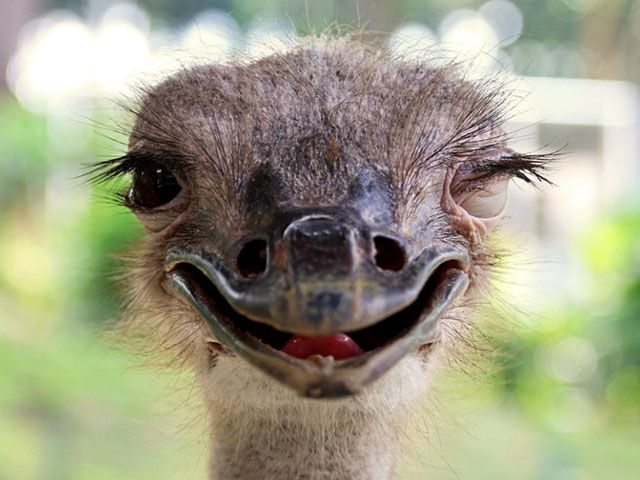 Прикольные и смешные 55 фото птиц
