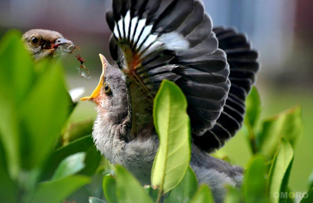 Прикольные фото птицы фото, днем рождения жену