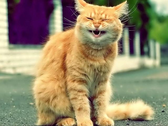 Прикольные и смешные котики (60 фото)