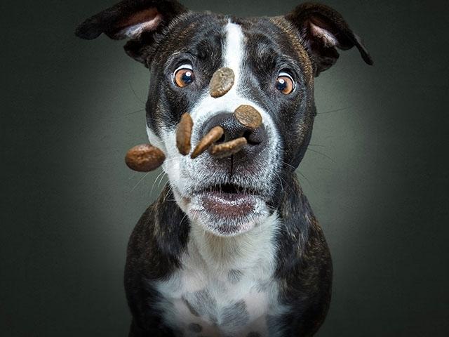 Прикольные и смешные собаки (55 фото)