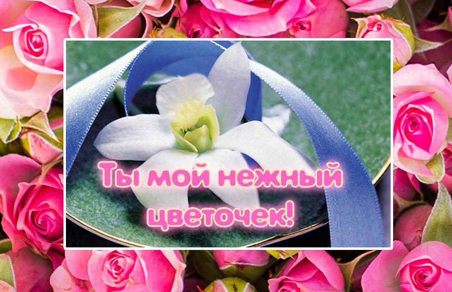 цветы-комплимент