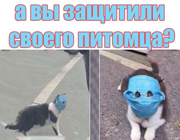 смешной кот в маске на карантине